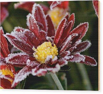 Autumn Frost Wood Print by Tiffany Erdman