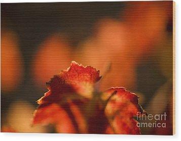 Autumn Grape Leaf Macro Wood Print by Charmian Vistaunet