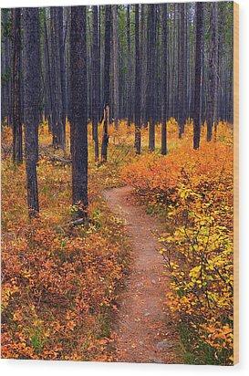 Autumn In Yellowstone Wood Print by Raymond Salani III