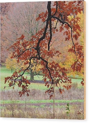 Autumn Rainbow Wood Print by Todd Sherlock