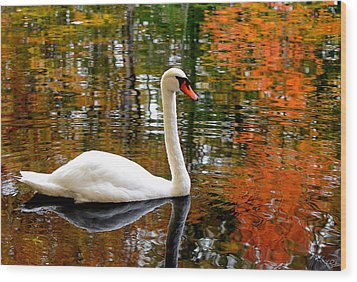 Autumn Swan Wood Print by Lourry Legarde