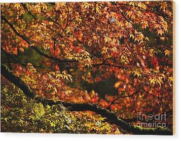 Autumn's Glory Wood Print by Anne Gilbert