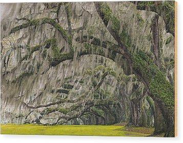 Avenue Of Oaks Wood Print by Joseph Rossbach