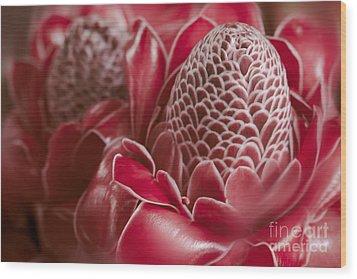 Awapuhi Ko Okoo - Torch Ginger - Etlingera Elatior - Phaeomeria Magnifica Wood Print by Sharon Mau