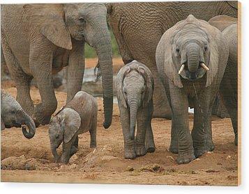 Baby African Elephants Wood Print by Bruce J Robinson