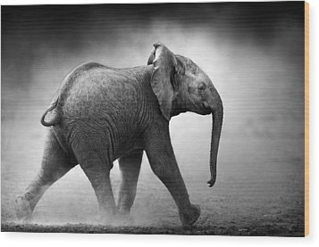 Baby Elephant Running Wood Print by Johan Swanepoel