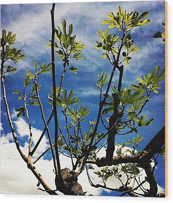 Baby Fig Wood Print by Stephanie Aarons