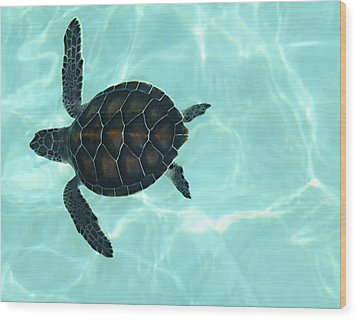 Baby Sea Turtle Wood Print by Ellen Henneke