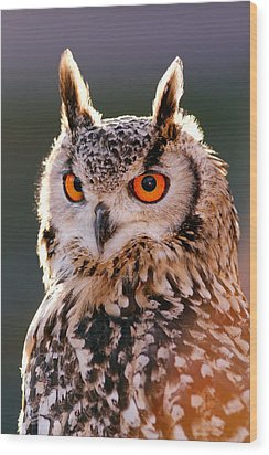 Backlit Eagle Owl Wood Print by Roeselien Raimond
