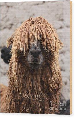 Bad Hair Day Wood Print by James Brunker