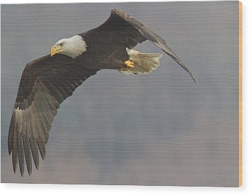Bald Eagle On The Wing Wood Print by Stanley Klein