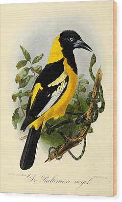 Baltimore Oriole Wood Print by J G Keulemans