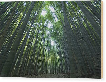Bamboo Forest Wood Print by Aaron S Bedell