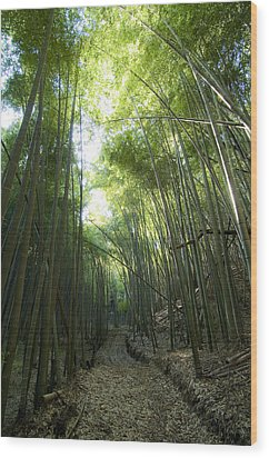Bamboo Road Wood Print by Aaron S Bedell