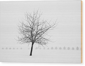 Bare Tree In Winter - Wonderful Black And White Snow Scenery Wood Print by Matthias Hauser