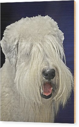 Bearded Collie - The 'bouncing Beardie' Wood Print by Christine Till