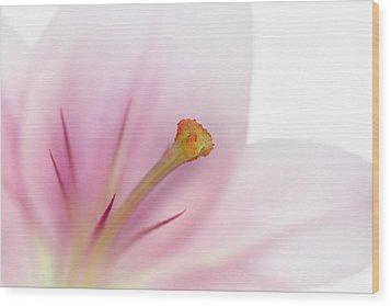 Beautiful Lily Wood Print by Melanie Viola