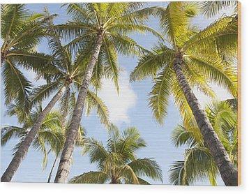 Beautiful Palms Wood Print by Brandon Tabiolo