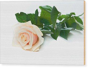 Beautiful Rose On White Wood Print by Michal Bednarek