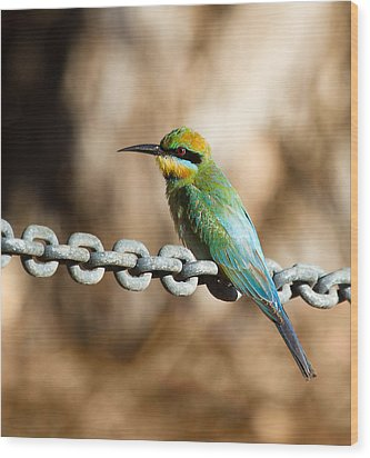 Beauty On Chains Wood Print by Mr Bennett Kent