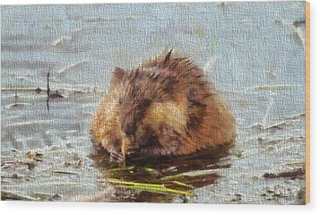 Beaver Portrait On Canvas Wood Print by Dan Sproul