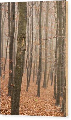 Beech Wood In Autumn Wood Print by Anne Gilbert