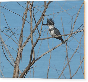 Belted Kingfisher 4 Wood Print by Ernie Echols