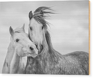 Best Friends I Wood Print by Tim Booth