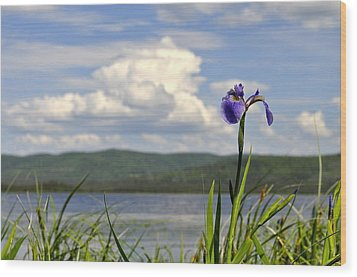 Birch Lake Iris Wood Print by Cathy Mahnke