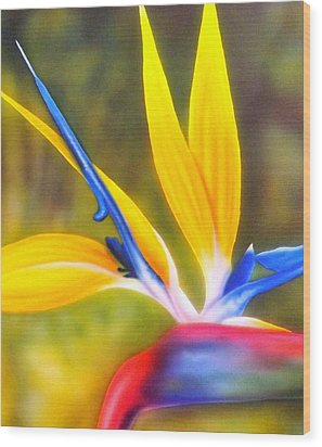 Bird Of Paradise Revisited Wood Print by Darren Robinson