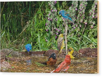 Birds Bathing Wood Print by Anthony Mercieca