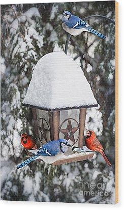 Birds On Bird Feeder In Winter Wood Print by Elena Elisseeva