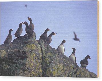 Birds On Rock Wood Print by F Hughes