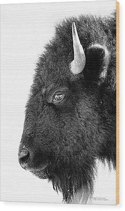 Bison Formal Portrait Wood Print by Dustin Abbott