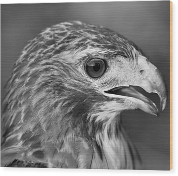 Black And White Hawk Portrait Wood Print by Dan Sproul