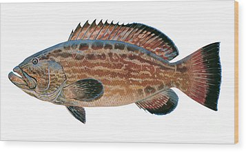 Black Grouper Wood Print by Carey Chen