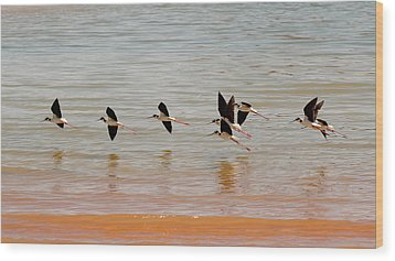 Black-necked Stilt - Lake Powell Wood Print by Julie Niemela
