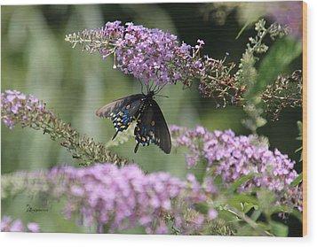 Black Swallowtail1-featured In Newbies-nature Wildlife- Digital Veil-comfortable Art Groups Groups Wood Print by EricaMaxine  Price