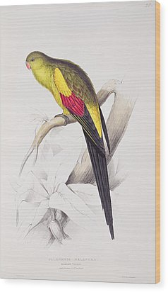 Black Tailed Parakeet Wood Print by Edward Lear