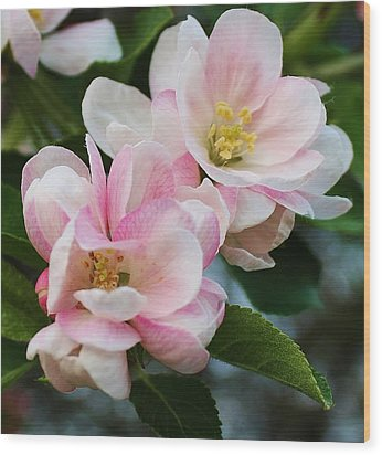 Blooming Crabapple Tree Wood Print by Bruce Bley