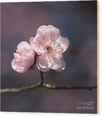 Blossom Wood Print by Joy Watson