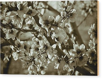 Blossoms Wood Print by Frank Tschakert