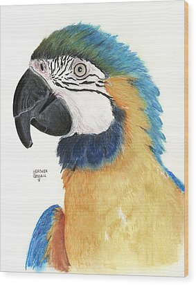 Blue And Gold Macaw Wood Print by Heather Gessell