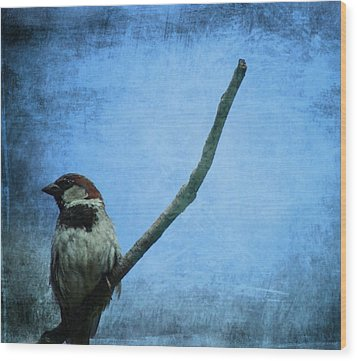 Sparrow On Blue Wood Print by Dan Sproul