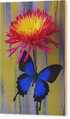 Blue Butterfly On Fire Mum Wood Print by Garry Gay
