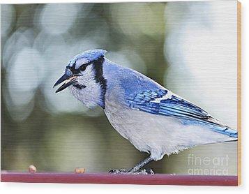 Blue Jay Bird Wood Print by Elena Elisseeva