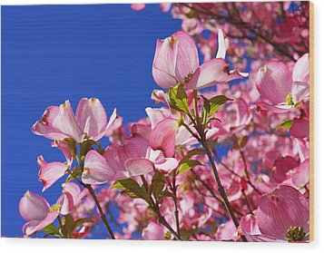 Blue Sky Art Prints Pink Dogwood Flowers Wood Print by Baslee Troutman