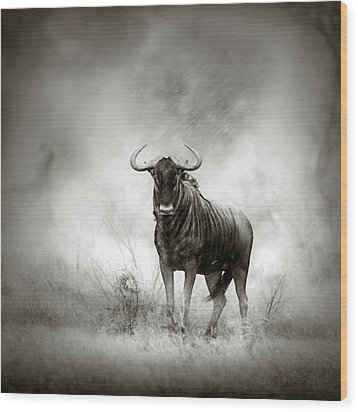 Blue Wildebeest In Rainstorm Wood Print by Johan Swanepoel