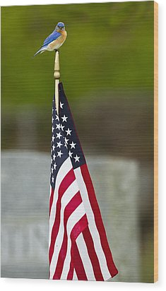 Bluebird Perched On American Flag Wood Print by John Vose