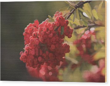 Blushing Berries Wood Print by Kandy Hurley